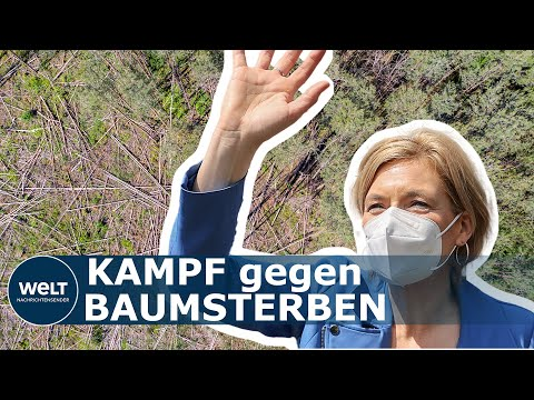 WÄLDER IN NOT: Das plant die Regierung, um die sterbenden Wälder in Deutschland zu retten