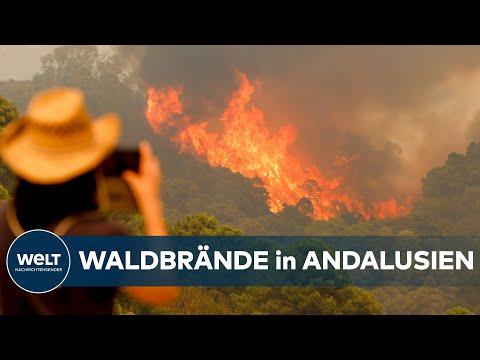 WALDBRÄNDE in SPANIEN: 3600 Hektar Fläche in Provinz Malaga verwüstet